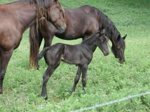 horses-pasture